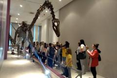 Prirodnjački muzej 64