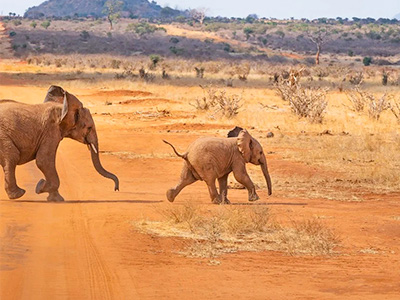 Slonovi u nacionalnom parku