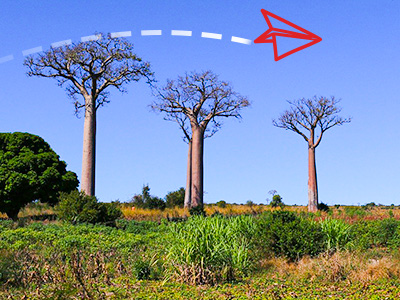 Baobab drvo