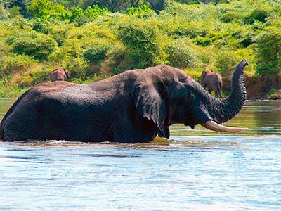 Krdo slonova prelazi reku
