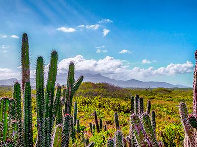 Flora i fauna u Vemecueli