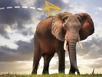 Slonovi, Zimbabve